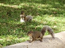 BLOGwebphoto-DowntownSquirrels10252009 [01]