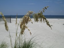 BLOG-SEA OATS-DAUPHIN ISLAND 080813 [02]